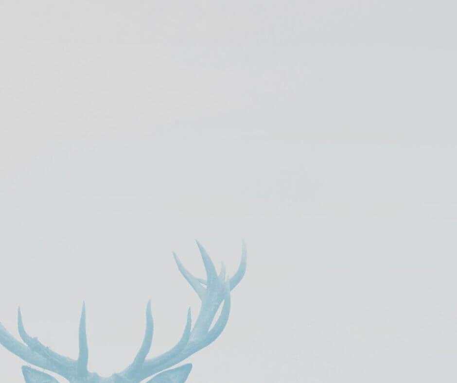 鹿角のバナー
