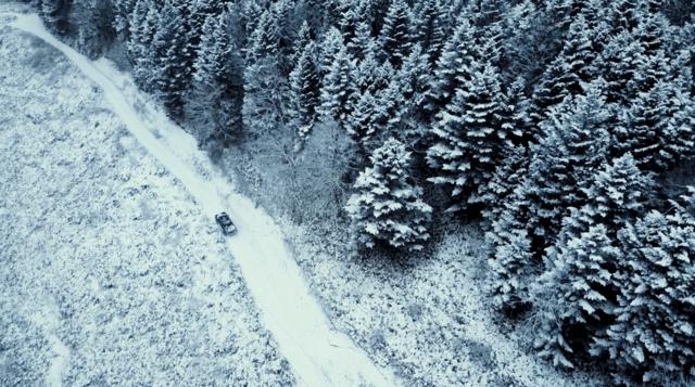 北海道のエゾ鹿
