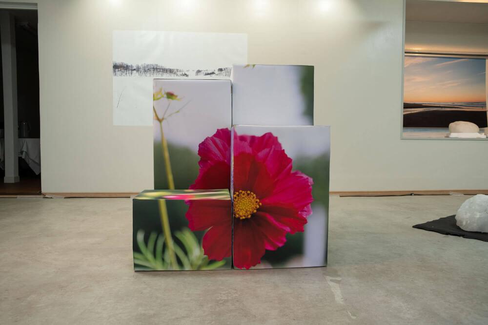視覚の空間-花