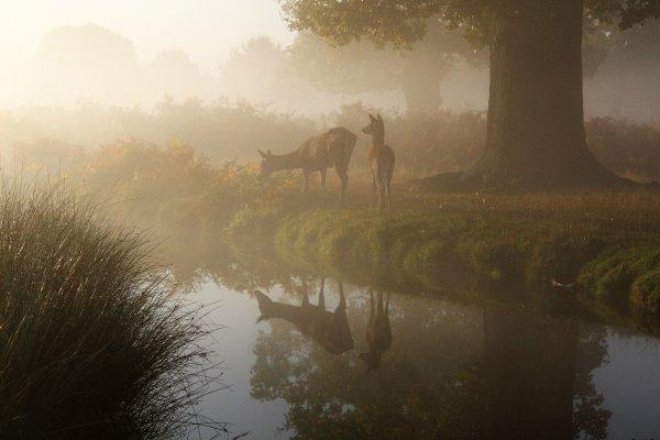 鹿革の風水