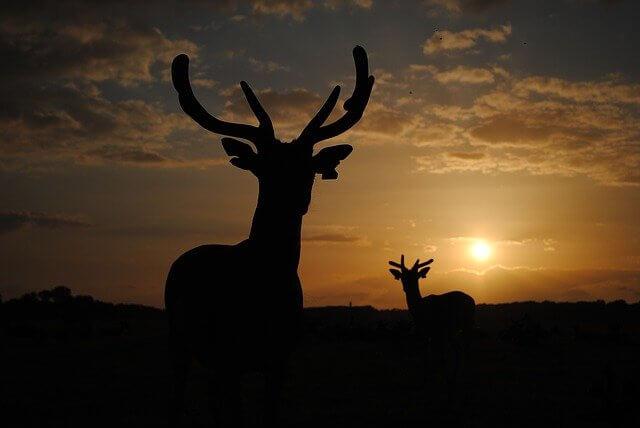 鹿メイン画像